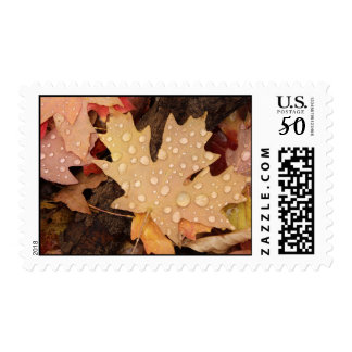 Maple Leaves Postage Stamp