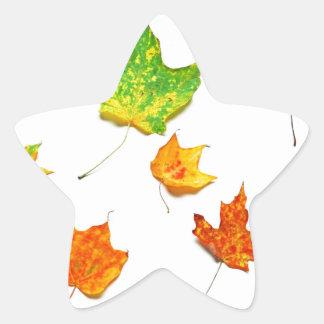 Maple Leaves Red, Orange, Yellow Green on White Star Sticker