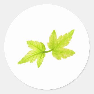 Maple Leaves Round Sticker