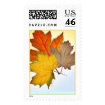 Maple Leaves Stamp