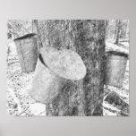Maple Sap Buckets On Tree Black Pencil Art Poster