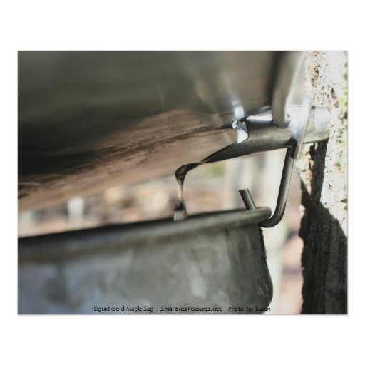 Maple Sap Running Nature Photography Poster