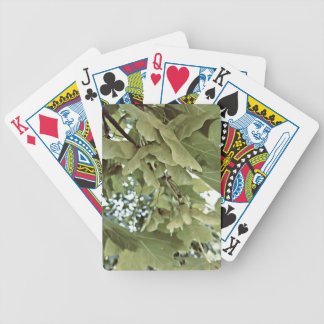 Maple seeds | bicycle playing cards