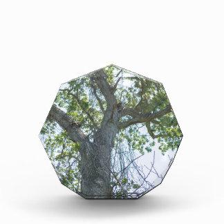 Maple Tree Acrylic Award