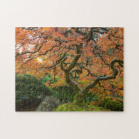 Maple Tree At The Japanese Gardens In Autumn Puzzle