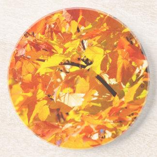 Maple tree autumn leaves beverage coaster