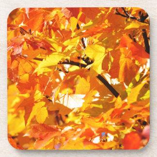 Maple tree autumn leaves coaster
