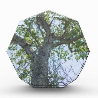 Maple Tree Award