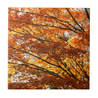Maple tree foliage ceramic tile