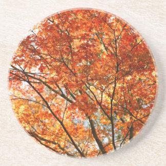 Maple tree foliage drink coasters