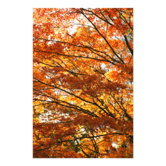 Maple tree foliage photo print