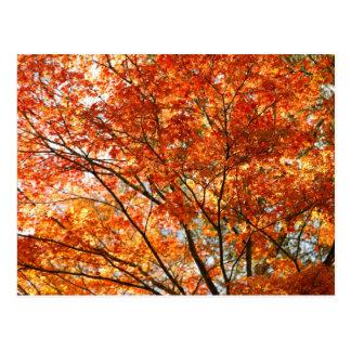 Maple tree foliage postcard