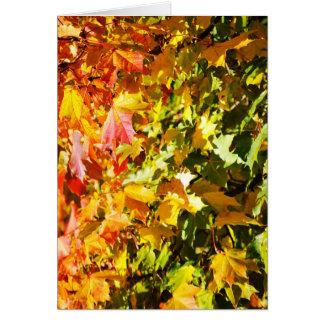 Maple tree in autumn card