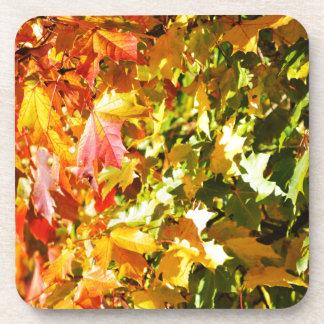 Maple tree in autumn drink coaster