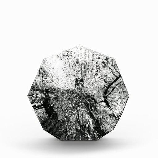 Maple Tree Inkblot Photograph Awards