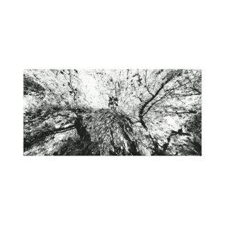 Maple Tree Inkblot Photograph Canvas Print