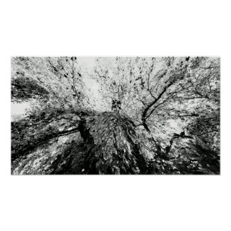 Maple Tree Inkblot Photograph Poster
