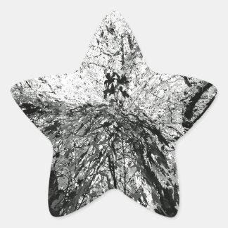 Maple Tree Inkblot Photograph Star Sticker