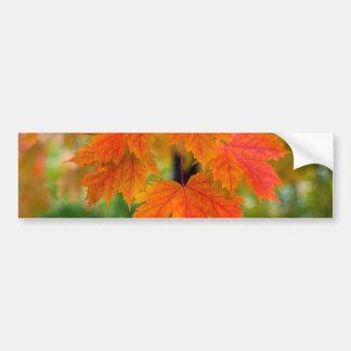 Maple Tree Leaves in Fall Color Closeup Bumper Sticker