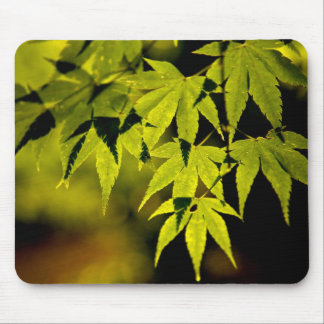 Maple tree mouse pad