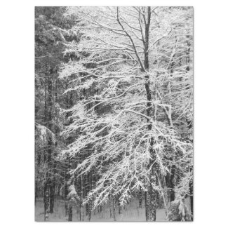 """Maple Tree Outlined In Snow 17"""" X 23"""" Tissue Paper"""