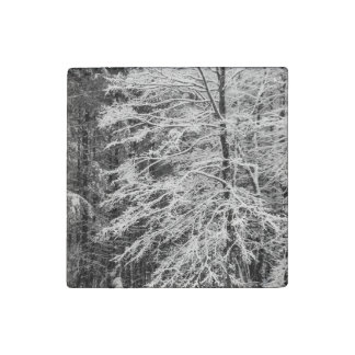 Maple Tree Outlined In Snow Stone Magnet