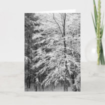 Maple Tree Outlined In Snow Holiday Card