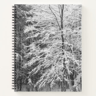 Maple Tree Outlined In Snow Journal