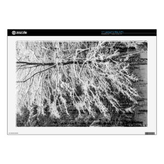 Maple Tree Outlined In Snow Laptop Decal