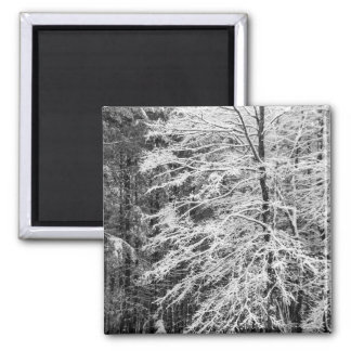 Maple Tree Outlined In Snow 2 Inch Square Magnet