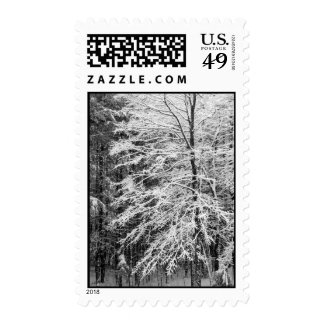 Maple Tree Outlined In Snow – Medium Postage