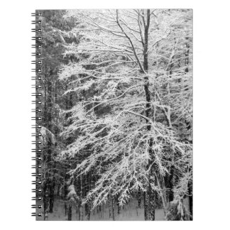 Maple Tree Outlined In Snow Note Books