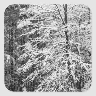 Maple Tree Outlined In Snow Square Stickers