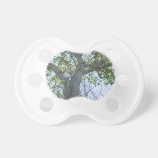 Maple Tree Pacifier