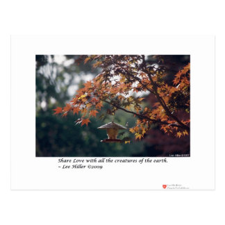 Maple Tree Photography Gifts Tees Collectibles Postcard