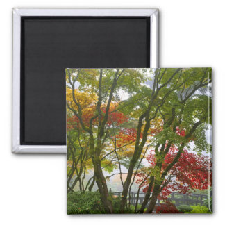 Maple Trees Fall Colors in Japanese Garden Magnet
