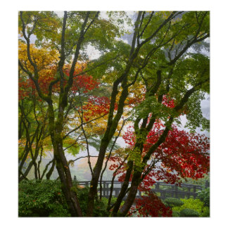 Maple Trees Fall Colors in Japanese Garden Poster