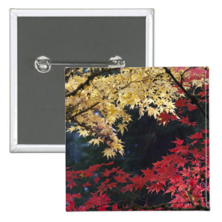 Maple trees in autumn color button