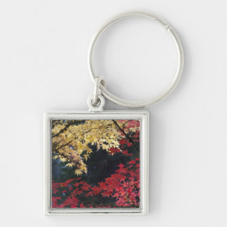 Maple trees in autumn color keychain