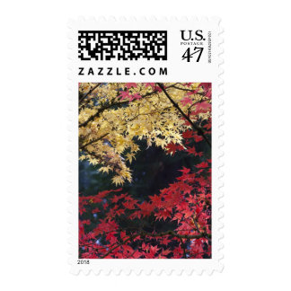 Maple trees in autumn color postage