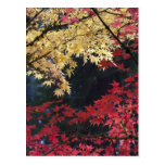 Maple trees in autumn color postcard