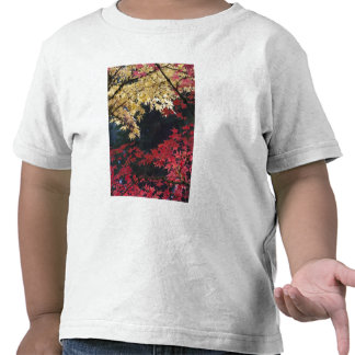 Maple trees in autumn color t-shirts