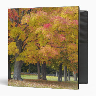 Maple trees in autumn colors, near Concord, 3 Ring Binder