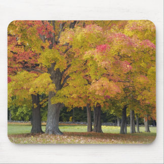 Maple trees in autumn colors, near Concord, Mouse Pad