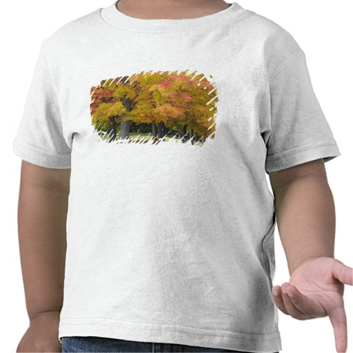 Maple trees in autumn colors, near Concord, T-shirts