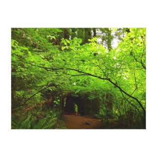 Maple Trees in Redwood Forest Canvas Print