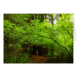 Maple Trees in Redwood Forest Card