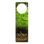 Maple Trees in Redwood Forest Door Hanger