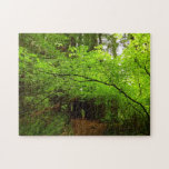 Maple Trees in Redwood Forest Jigsaw Puzzle