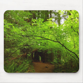 Maple Trees in Redwood Forest Mouse Pad